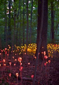 We saw this exhibit! It was absolutely beautiful. I will pin my own pix someday. VERY faerie worldish Longwood Gardens' Light Exhibit