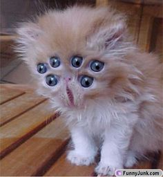 These animals are all suffering from bizarre genetic mutations. The bizarre mutation make for a pretty unique anim. Scary Animals, Funny Animals, Trippy, Two Faced Cat, Cat Life, Crazy Cats, How To Fall Asleep, Funny Cats, Silly Cats