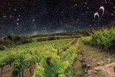 Barcelona acoge la primera gran muestra de vinos biodinámicos https://www.vinetur.com/2015040918889/barcelona-acoge-la-primera-gran-muestra-de-vinos-biodinamicos.html