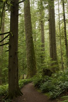 ~~Oregon Forest |  Silver Falls State Park, near Silverton, Oregon by Anna Calvert Photography~~