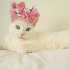 My cats would never keep a flower crown on long enough so I will just enjoy pictures of other kitties in them.