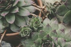 Succulents by Krautomatic on @creativemarket #floral#spring#inspiration#flowers#flower#decoration#plants#nature#green#greenery#succulent