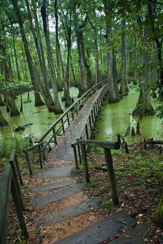 cypress swamp bridge by Judy Rushing, via Flickr