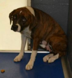 UPDATE: Surrendered dog who placed paw on owner as he left headed for new life-slide0