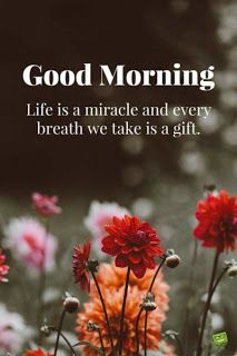Free Download 145 Hd Good Morning Images Pictures Photos Wallpapers Pics For W Good Morning Inspirational Quotes Good Morning Photos Morning Quotes Images