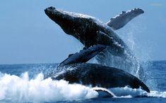 whale watching unawatuna