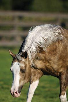 Big Chex To Cash--reining stallion...gorgeous!!