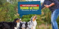 Finding the most effective dog training methods will depend on your dog. Science has proven that some methods are more effective than others. Dog Training Methods, Training Your Dog, House Breaking Dogs, Cat Safe Plants, Pet News, Cat Sweaters, Old Dogs, New Puppy, Happy Dogs