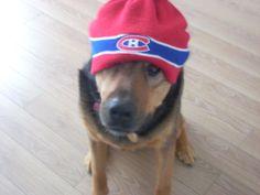 Chien à la tête bien au chaud, soumis par Vannessa Desrochers / Warm-headed Habs dog, submitted by Vannessa Desrochers