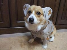 Oh. My. Corgi. A corgi in corgi printed corgi jammies. THE WORLD JUST GOT A MILLION TIMES CUTER!