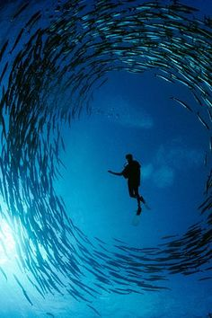 Scuba dive with the fishes and join their circle during your next tropical vacation trip.