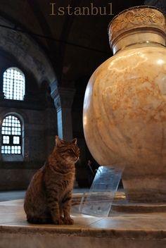 Stadt der Katzen http://fc-foto.de/35787794