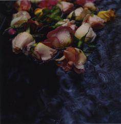 lidewij edelkoort - bloom