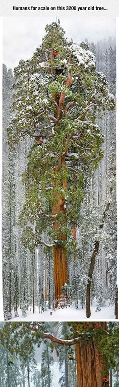 One Large Tree.  saw this in a National Geographic and the scale of this tree is awesome.