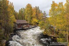 #Autumncolours in #Myllykoski #Kitkajoki #Kuusamo #Finland #visitfinland #visitkuusamo #visitlapland #syksy #ruska #canonsyksy - Mikael Rantalainen (@FinnishViews) | Twitter