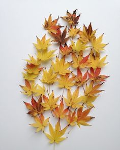 #flowleaf2015 #flowmagazine_fr #leaves#leaf