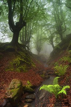 Autumn in Otzarreta Forest Gorbea Natural Park, Biscay, Basque Country, Spain Beautiful World, Beautiful Places, Beautiful Pictures, Foto Nature, Landscape Photography, Nature Photography, Tree Forest, Woodland Forest, Autumn Forest
