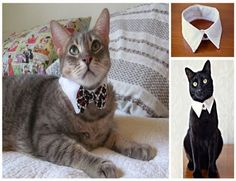 A Classy Upgrade Collar for Cats. DIY, easy to do and cute as a button! I made the picture a little bigger so it's easier to see. I'll delete the old one.
