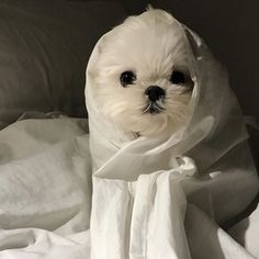 Maltese and Children: Is It a Good Combination - Champion Dogs Cute Dogs And Puppies, Baby Dogs, Doggies, Cute Little Animals, Little Dogs, Animals And Pets, Funny Animals, Maltese Dogs, Tier Fotos