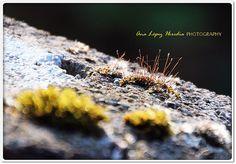 El bokeh que admiraba la sutileza del un hilo de araña que estaba en el musgo tendido al sol