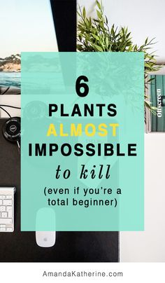 Start small with low maintenance small investment plants to build your confidence and green thumb. These 6 plants cost just $5 each and are easy to take care of and look beautiful in your home. Click to see my watering schedule for each plant!