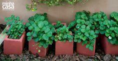 A horta inusitada da família é plantada dentro de elementos estruturais, desses usados na construção civil, que funcionaram muito bem como vasos. De lá, além de boas lições, saem os temperos e as frutas para abastecer a cozinha no dia a dia.