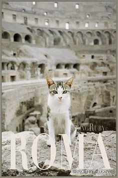 A Tiny Cat of Rome (in the Colosseum)