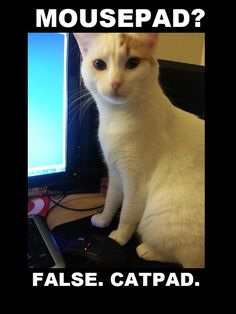 Mousepad?