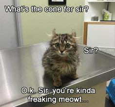 Funny Animal Pictures Of The Day – 18 Pics
