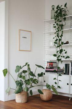 (Anzeige) Urban Jungle Im Wohnzimmer