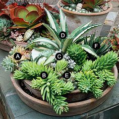 Succulent Container Garden Plans/ Love this too. My granny already has some in her back yard.