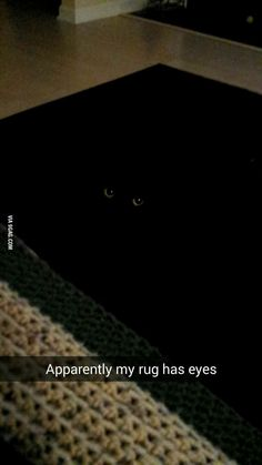 Basement Cat Works in Mysterious Ways - black cat blends in funny cat pictures - Cat Quotes - Funny Cat Quotes I Love Cats, Crazy Cats, Cute Cats, Funny Animal Pictures, Funny Animals, Cute Animals, Animals Sea, Funny Cat Compilation, Funny Cat Memes