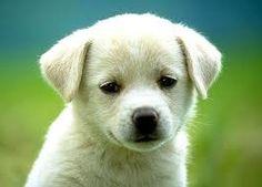 cães fofinhos