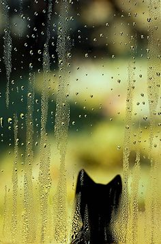 watching the rain. Again, repin from asad jafar from pinterest xoxoxo