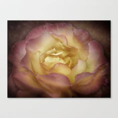 Peace be To You Stretched Canvas by Fiona & Paul Photography and Digital Art - $85.00