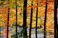 Autumn by Habub3, via Flickr