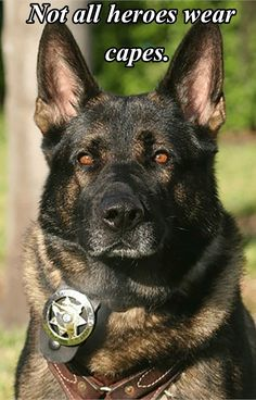 German Shepherd Working K9 Hero! May God Bless you!!!