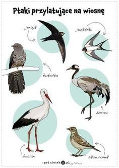 Znalezione obrazy dla zapytania ptaki przylatujące na wiosnę