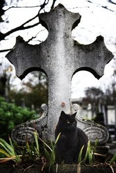 on duty in the cemetery. What a great picture for Halloween! Cemetery Statues, Cemetery Headstones, Old Cemeteries, Cemetery Art, Graveyards, Angel Statues, Haunted Places, Pics Art, Beautiful Cats