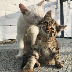 same cats ^