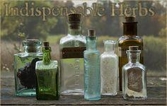 Matthew Wood: The Ten Most Indispensable Herbs in My Practice