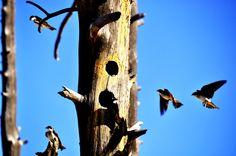 Les oiseaux et leur liberté