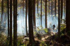 Redwood Forest, Rotorua Rotorua accommodation http://malfroymotorlodge.co.nz