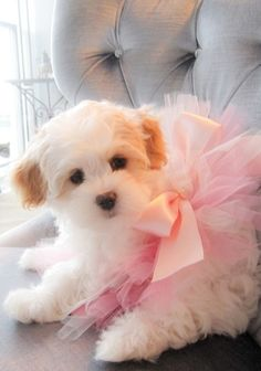 Beautiful puppy.... beautiful pink bow