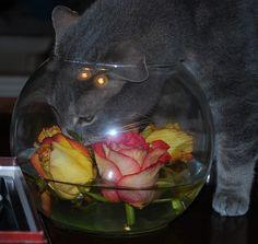 Rose Bowl - Jake by Danielle Carrier, via Flickr