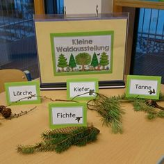 Yesterday we sorted our findings from the forest and put them together for a sma. Primary School Teacher, Elementary Teacher, Elementary Schools, Education Logo, Primary Education, Forest Classroom, Social Trends, Thing 1, Middle School Science