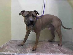 URGENT - Manhattan Center    SNOOP - A0993299    MALE, BROWN, PIT BULL MIX, 2 yrs  STRAY - STRAY WAIT, NO HOLD  Reason STRAY   Intake condition NONE Intake Date 03/07/2014, From NY 10474, DueOut Date 03/10/2014 https://www.facebook.com/Urgentdeathrowdogs/photos_stream