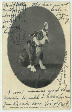 1905 - A sad sea dog