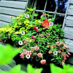 A. Canna 'Pretoria' -- 2   B. Lantana 'Lucky White' -- 4   C. Coleus (Solenostemon 'Dappled Dawn') -- 1   D. Coleus (Solenostemon 'Dark Frills') -- 2   E. Vinca major 'Variegata' -- 3   F. Melampodium paludosum -- 1   G. Sweet potato vine (Ipomoea batatas 'Margarita') -- 1   H. Maidengrass (Miscanthus sinensis) -