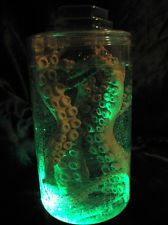 Lighted Jar Octopus Tentacles Mad Scientist Lab Specimen Halloween Party Prop